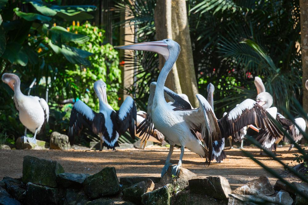 The Bali Bird Park is home to 250 bird species