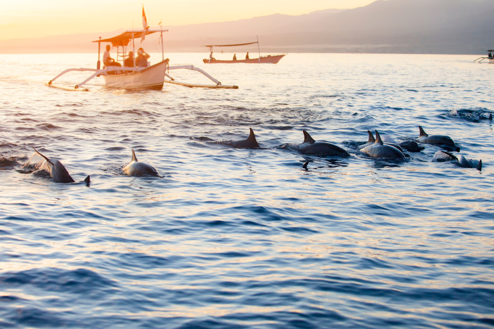 Go dolphin watching off the coast of Lovina during your honeymoon.