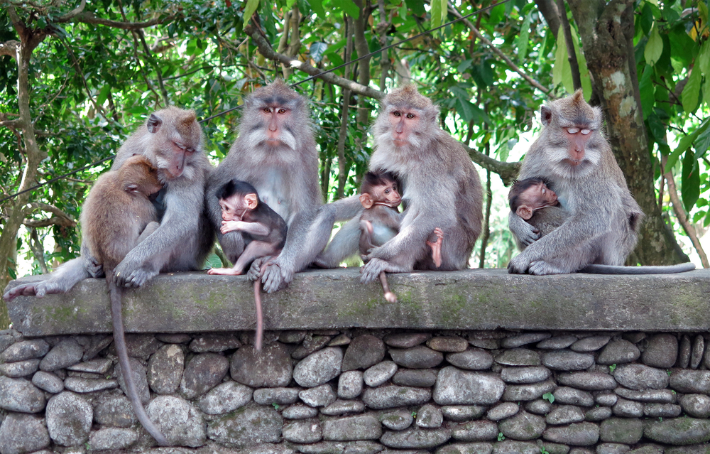 Get up close and personal with the monkeys at Ubud's Monkey Forest.