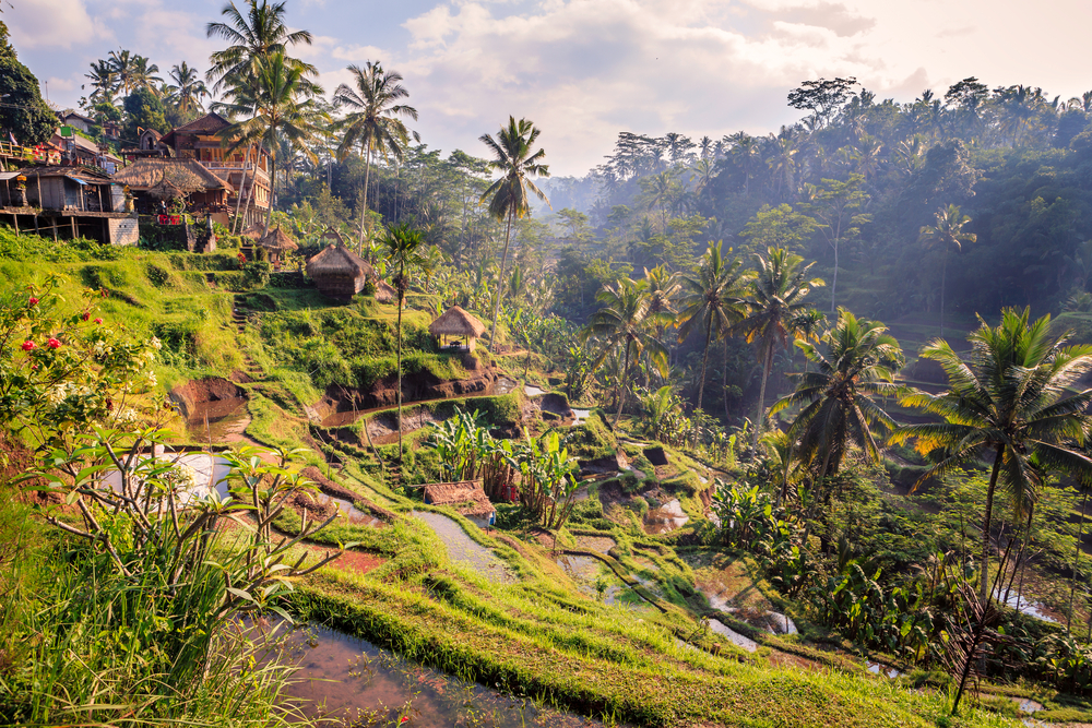Ubud's beautiful rice terraces are world-famous.