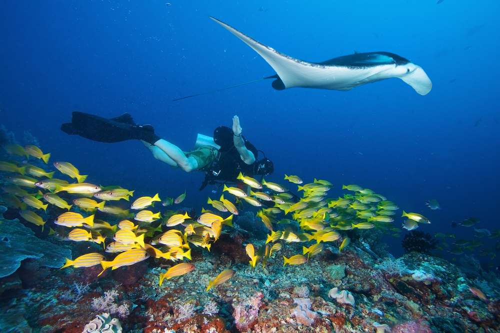 Diving expeditions from Candidasa allow visitors to swim among incredible marine species.