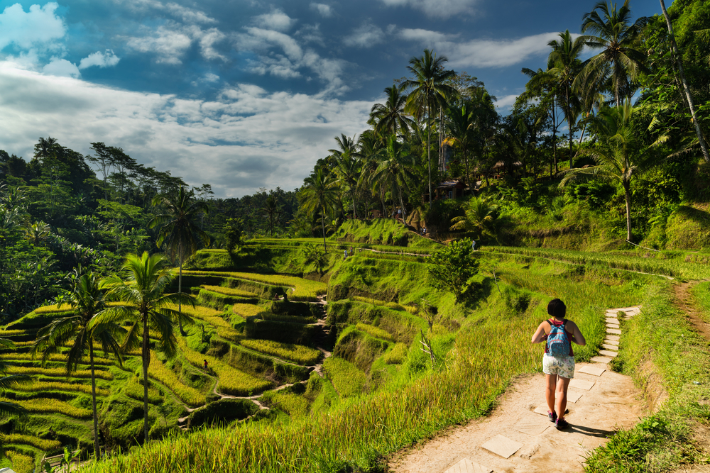 The incredible Tegalalang rice terraces are a must-see in Ubud.