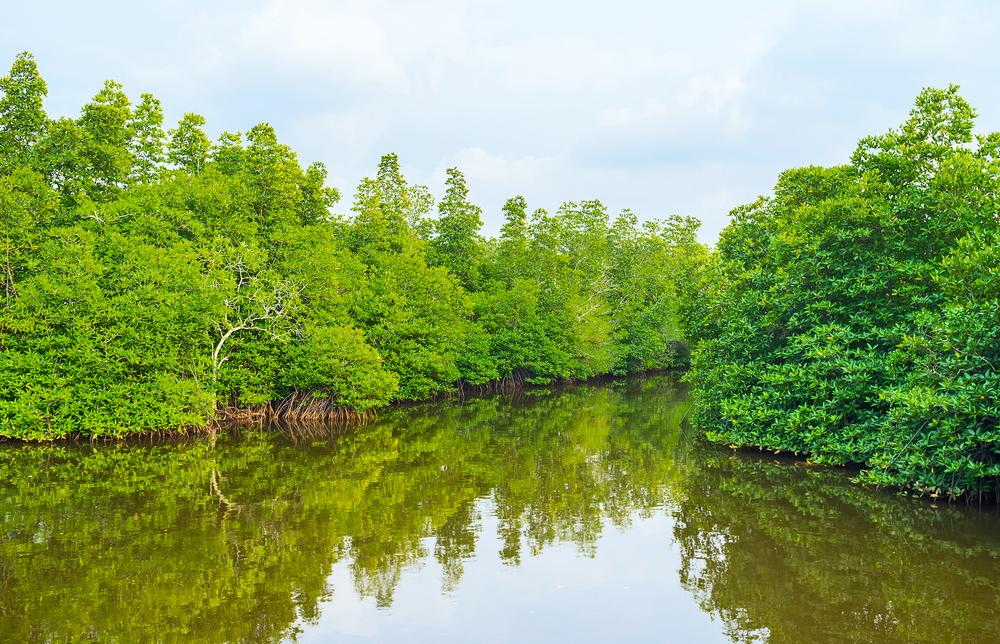 Travel along the Madu River to reach Cinnamon Island.